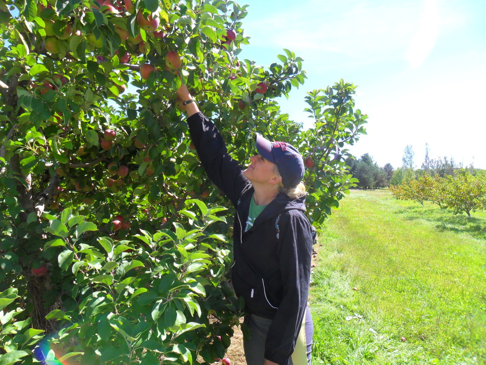 Apple Picking Grab