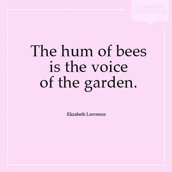 Elizabeth Lawrence Hum of Bees Quote