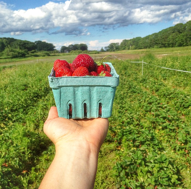 Strawberry Picking Sky Maine