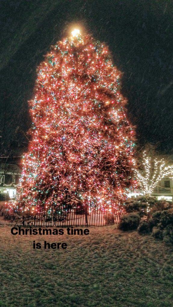 Christmas Tree in Princeton